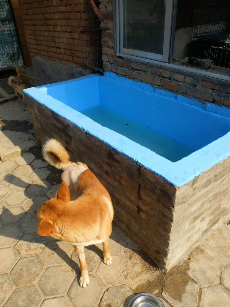 New swimming pool for the dogs – Community Dog Welfare Kopan
